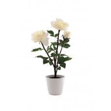 Светильник интерьерный Старт LED Роза белый 2*R6 (10)